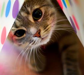 Cats Corner Store